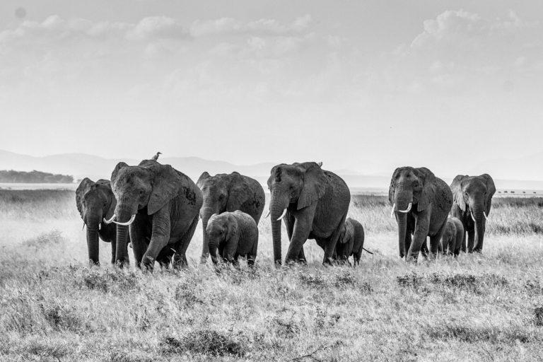 The Big Five – meine 5 Tipps für Gründer/innen